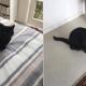 Мужчина заботился о коте, лечил его, а потом… его кот вернулся домой