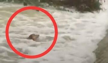 Парни увидели собаку в бурлящем потоке и не смогли пройти мимо