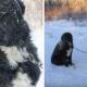 Раненую собаку приковали на улице в лютый холод
