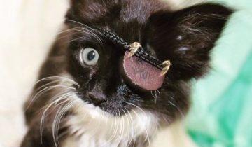Из-за инфекции котенок потерял один глазик