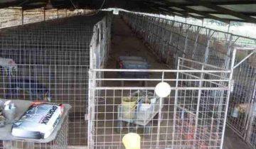 В Техасе на ферме 150 собак держали в качестве доноров крови