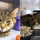 Семья потеряла любимого кота. Поиски ни к чему не привели