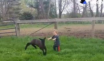 2-летний мальчик помогает маме спасать и выхаживать животных