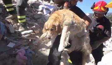 Бедную собаку нашли под завалами через девять дней после землетрясения