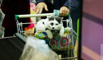 Самый умный кот Калининграда и не только