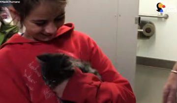 Ее дом сгорел во время пожара, но девочка думала только о пропавшем котенке