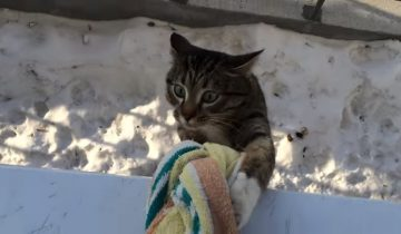 Кот, который не ищет легких путей домой, собрал 2,7 млн просмотров
