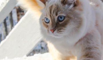 Когда этот кот сидит у окна, происходит настоящее волшебство