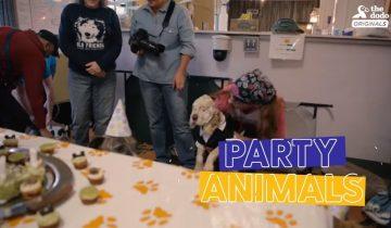 Вечеринка для старой слепой собаки: невероятно трогательно
