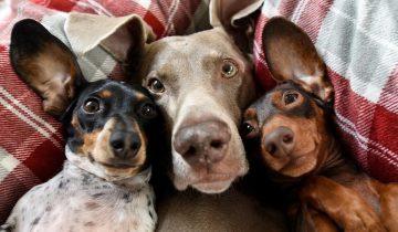 Звездная троица: страница собак в Инстаграм собрала 1,5 млн подписчиков