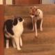 Кот и пес встретились на ступеньках, а через секунду…