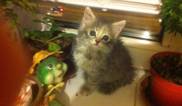 Увидев взгляд этого котенка, женщина ринулась его спасать