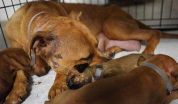 Материнское сердце почуяло беду: собака принесла щенков к людям