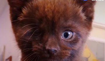Кто сказал, что черные коты приносят несчастье? Я же само счастье!