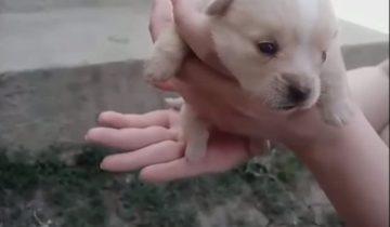 Кошка нашла на остановке коробку со щенками и усыновила одного