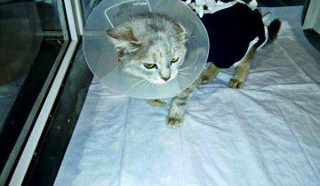 С ужасными ранами кошечку принесли в клинику на усыпление