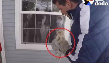 Этого котенка нашли таким замерзшим, что неясно было, жив ли он