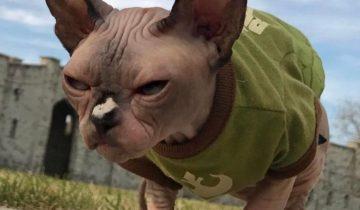 Кайро: для кого-то злобный, а для кого-то — самый любимый кот
