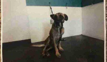 6 лет жизни в закрытом ящике. Собака разучилась ходить и потеряла веру в лучшее
