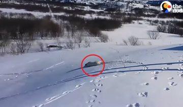 Лабрадор обожает кататься со снежной горки