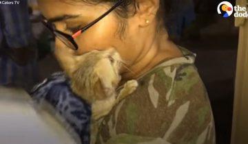 Котенка удалось спасти благодаря его природным инстинктам