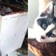 Кошачье семейство из… стиральной машинки