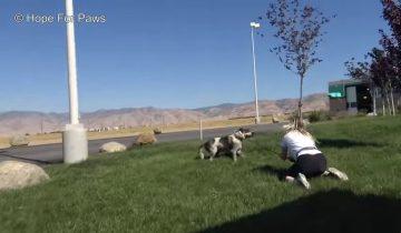 Преданный хозяевами пес не поверил волонтерам