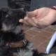Мал да удал: щенок спас двух замерзающих котят