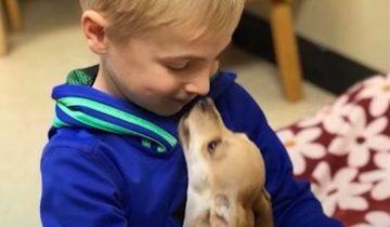 Мальчик спас сотни собак. Все благодаря трогательным роликам