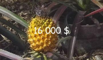 10 самых дорогих фруктов на свете