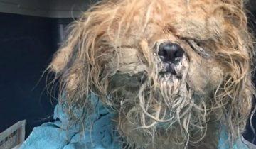 Эту собаку нашли привязанной к фонарному столбу