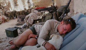 Парень увидел этого пса в Афганистане и не смог уехать без него