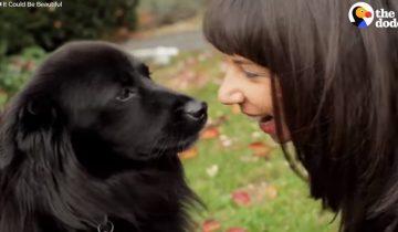 Собака начала терять способность ходить, но обрела лучшую мамочку на свете
