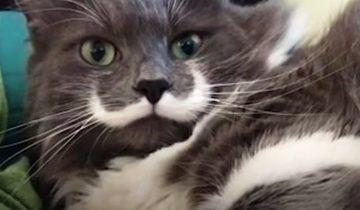 У этого кота самые крутые и оригинальные усы
