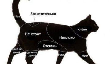 Пользователи Твиттера подготовили свои инструкции «Как гладить кошку»