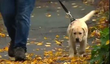 Обычная утренняя прогулка чуть не закончилась для щенка гибелью