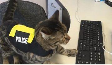 Кто не слышал о собаке-полицейском? Но кот в форме — это что-то!
