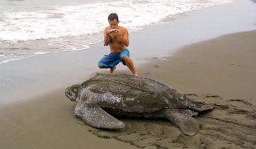 Фантастически большие животные нашей планеты