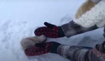 Студенты нашли замерзшего бельчонка