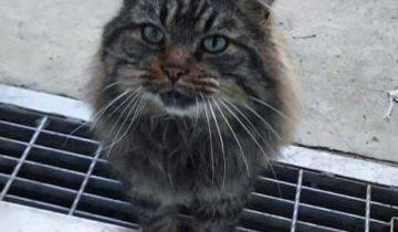 Кот совсем одичал и привык справляться без помощи людей