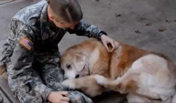 Собаки, которые не видели хозяев 2, 5 и даже 10 лет