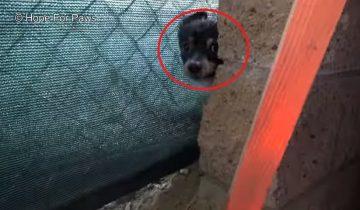 Дети нашли пятидневных щенков и решили их выходить