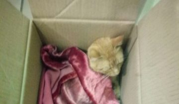 Кота сбила машина, но он оказался стойким солдатиком