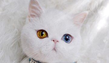 Пам Пам — кошка сказочной красоты стала звездой Инстаграм