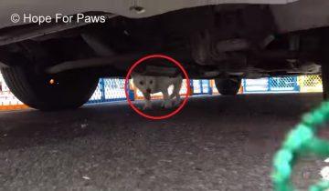 Щенок был таким напуганным, что никак не хотел вылазить из-под авто
