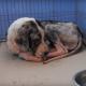 Пса подобрали в военном лагере: больной, слабый, он не переставал вилять хвостом