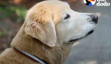 Она увидела старого пса на улице и подумала: «Это судьба!»