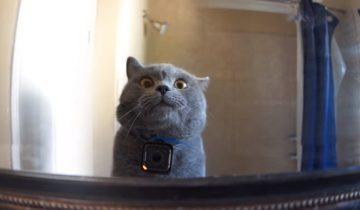 Что делает дома кот в отсутствие хозяина? GoPro все расскажет