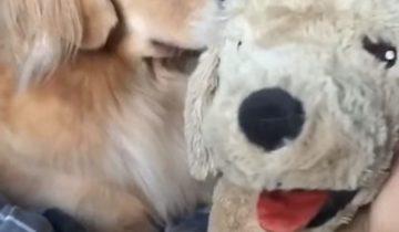 Как пережить предательство: собака приревновала