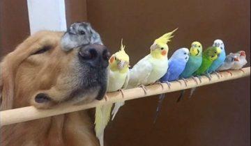 Необычная команда друзей из собаки, хомяка и 8 попугаев